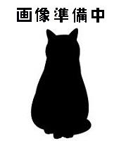 待ち猫02
