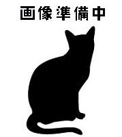 待ち猫04