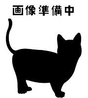 待ち猫06