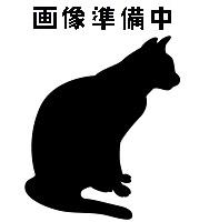 待ち猫05