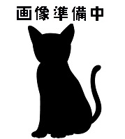 待ち猫07