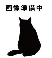 待ち猫08
