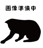 待ち猫10