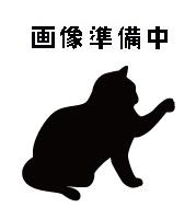 待ち猫12